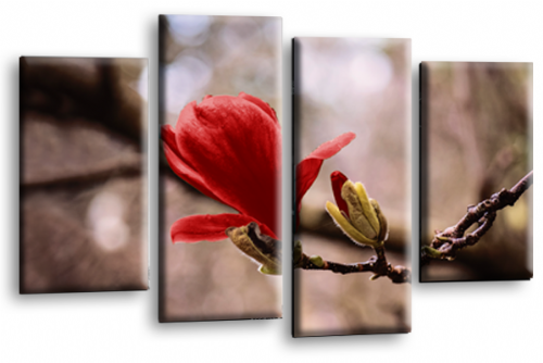 Floral Wall Art Picture Grey Red Spring Flower Print